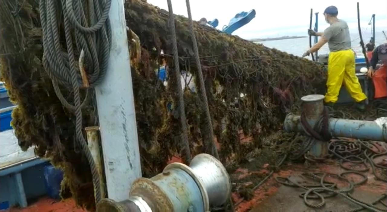 Un pêcheur hisse un filet plein d'algues.